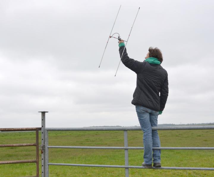 Radiotelemetrische Untersuchungen in der Dümmer-Niederung